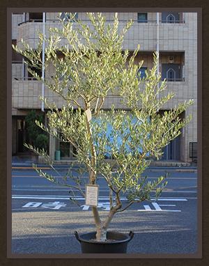 【東京】おしゃれな植物が買える都内23区のおすす …
