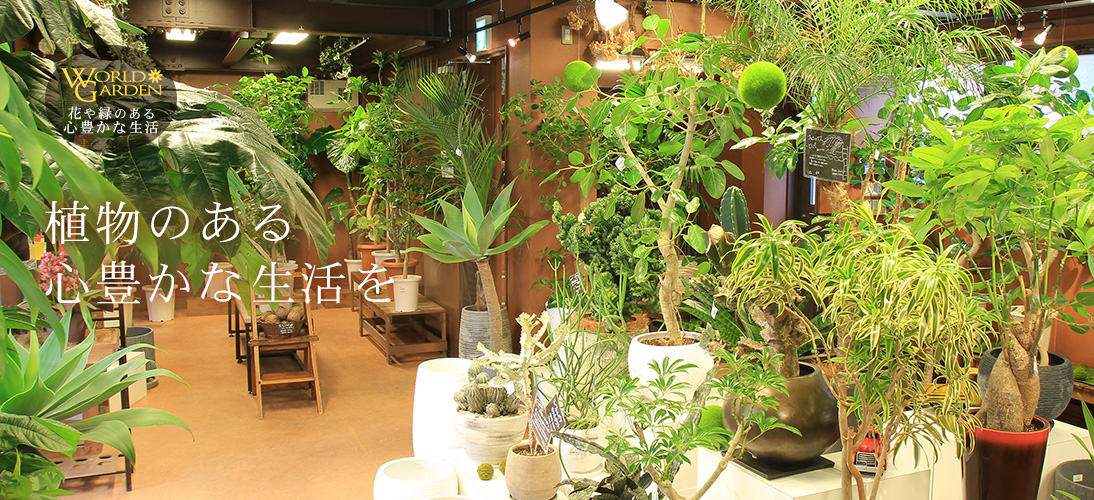 人気の観葉植物なら東京都内最大級の専門店 ワー …